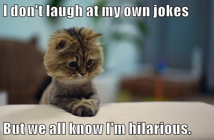 Find the Stunning Funny Cat Meme Pictures