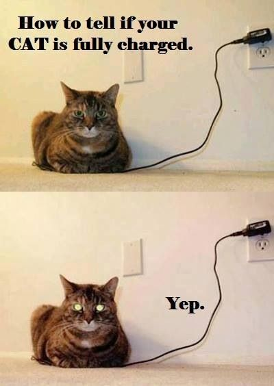 Your cat is now fully charged Funny Animal Sayings