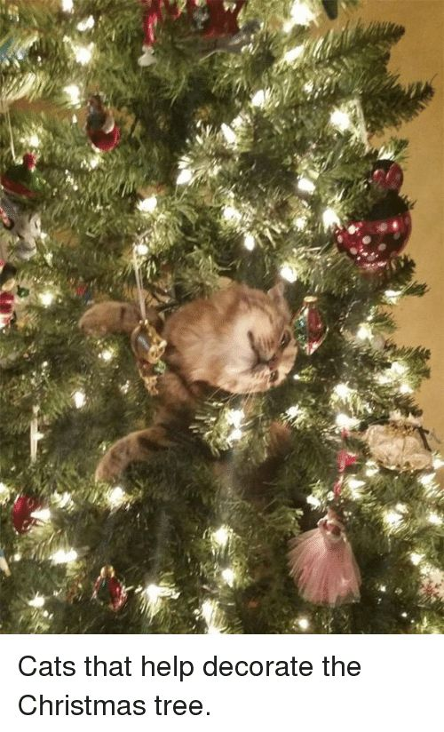Cats Christmas and Funny 40 Cats that help decorate the Christmas tree