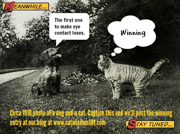 dog cat caption contest Funny Vintage Cat Caption Contest Winner