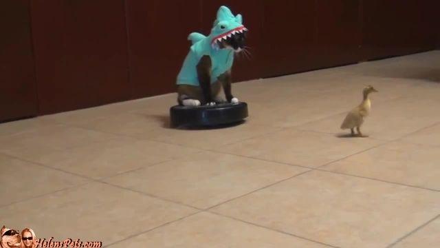 roomba driver cat shark max arthur funny