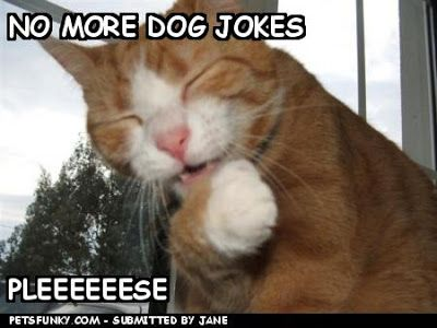 Funny w papers HD w papers dog s funny