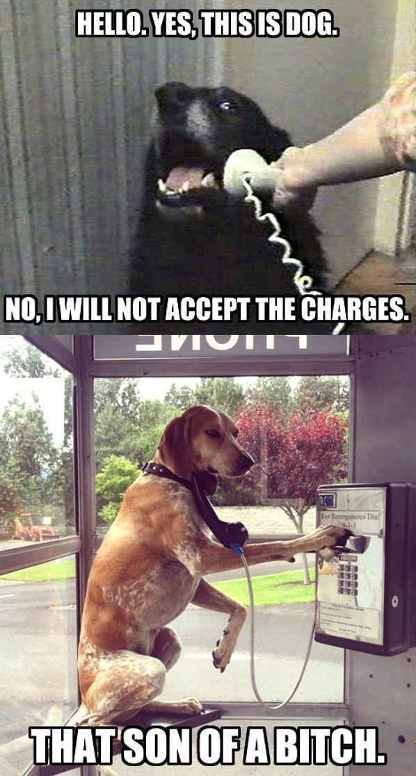 will not accept Funny Dog Memes Funny Dogs Funny Puppies Silly Dogs