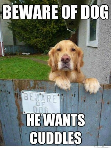A i would jump the fence just to hug the dog 3