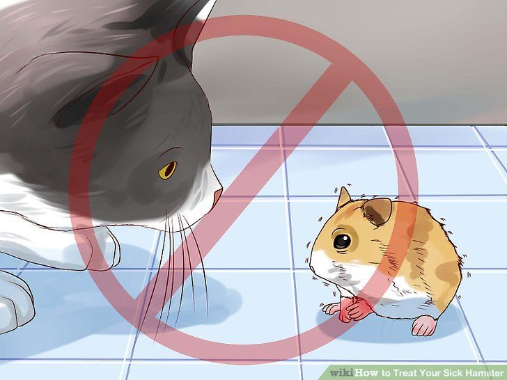 Image titled Treat Your Sick Hamster Step 10