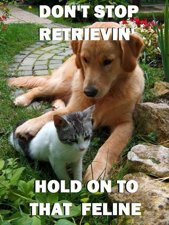 hold on to that feline LOL we love this punny spin on Don t Stop Believin by Journey LOL Musical Funnies