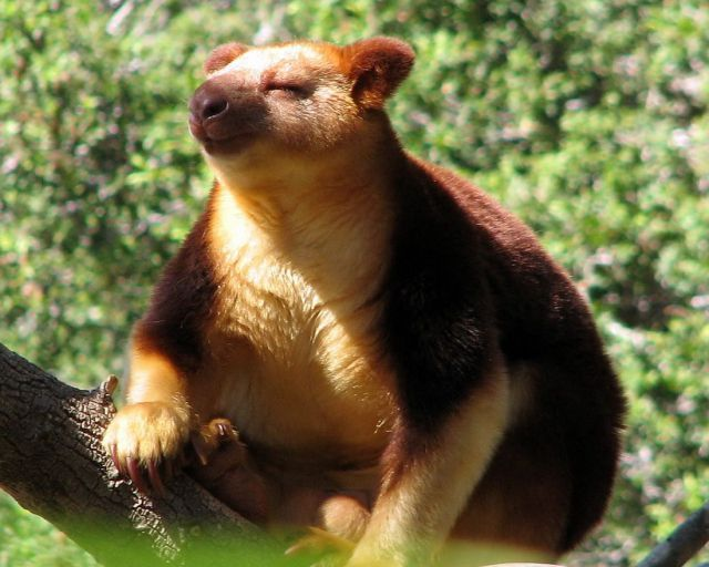 Funny Animal s Funny Animals Animals s Cute Animals Funny