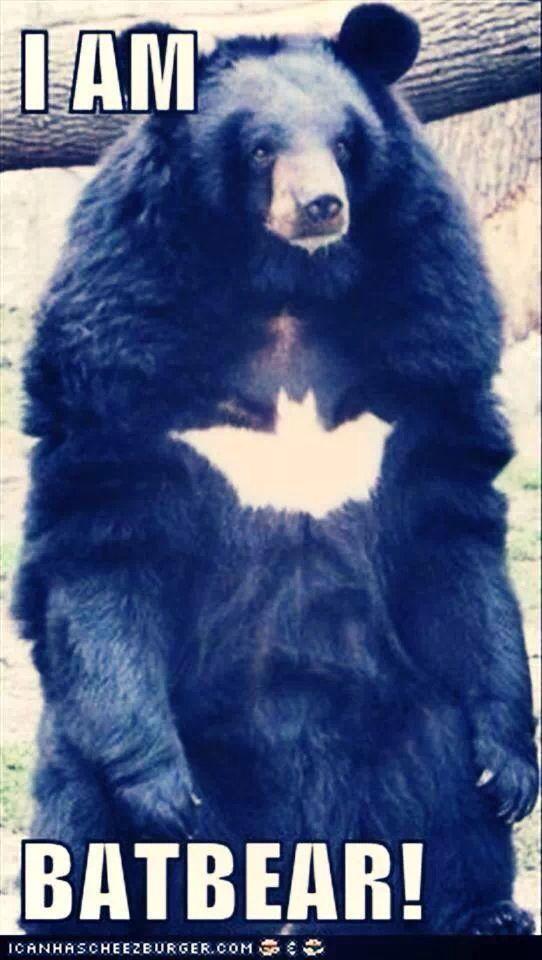 Bat Bear Funny Animal Sayings Humorous Animals Hilarious Animal Memes Funny Pet
