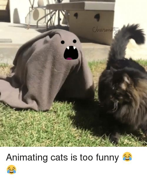 Dank 🤖 and Anime Cats clarwvu Animating cats is too funny 😂😂