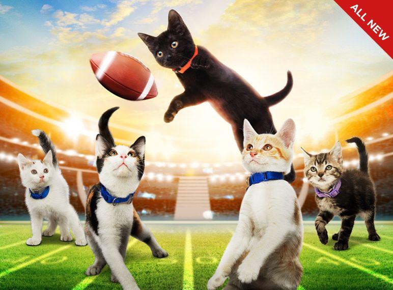 Kitten Bowl See the Cutest Kittens on TV kittenbowl
