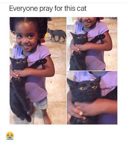 Cats Funny and Cat Everyone pray for this cat 😭