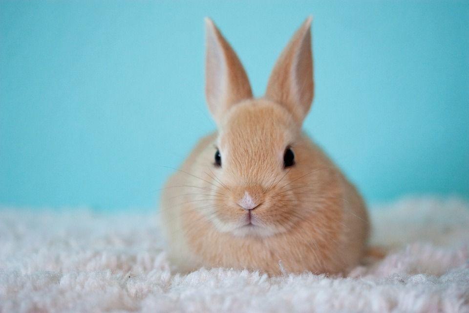 Cute Baby Bunny Rabbit Pet Easter