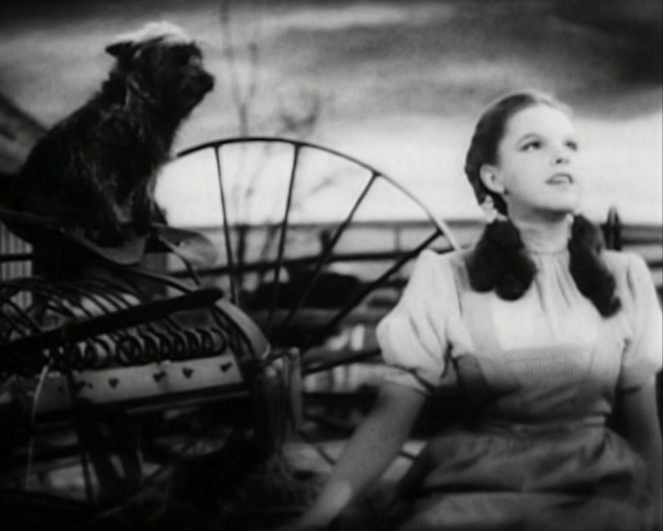 Judy Garland as icon