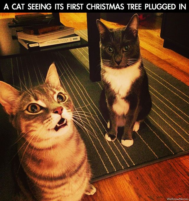 a cat seeing its first christmas tree plugged
