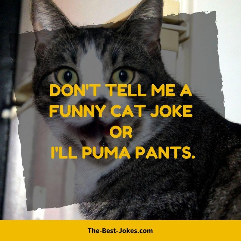 Free Cat Jokes