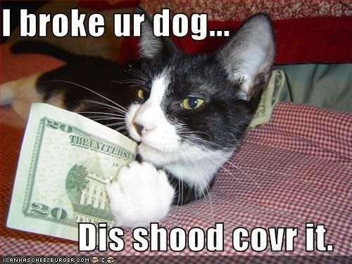 Cats images Funny Cats Quote wallpaper and background photos