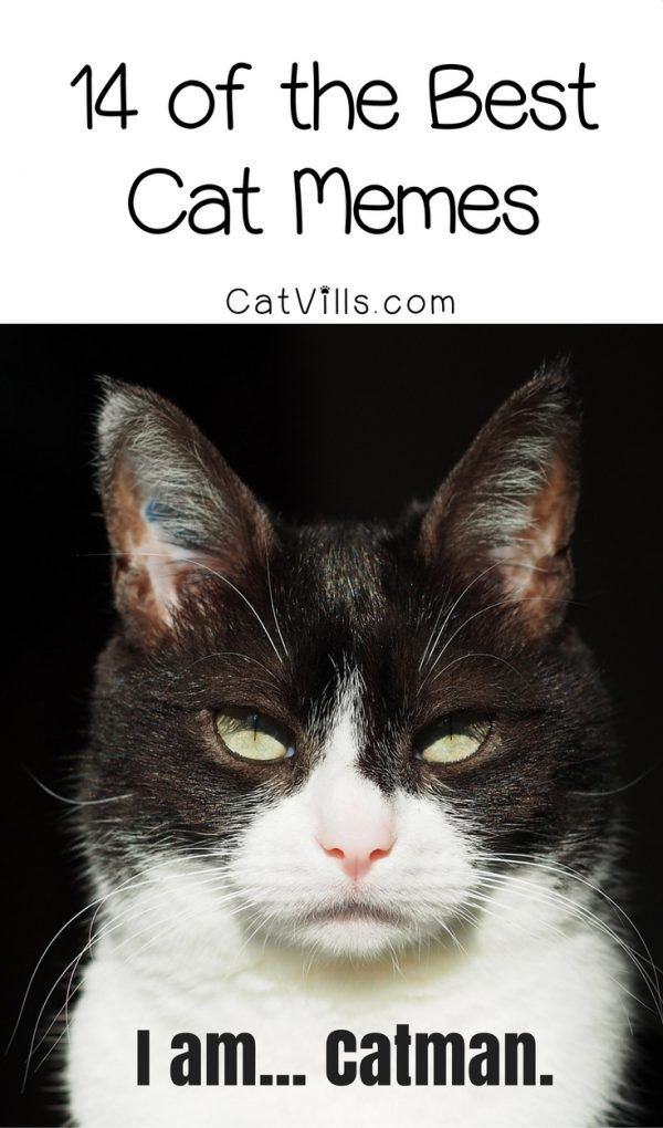 Funny cat pictures We ll do you one better We re LOLing