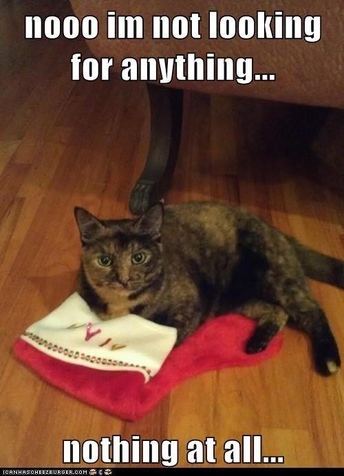 christmas stocking captions suspicious Cats