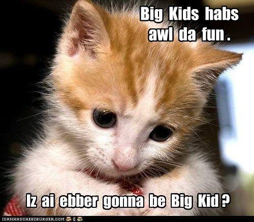grow up adult captions big kid Cats