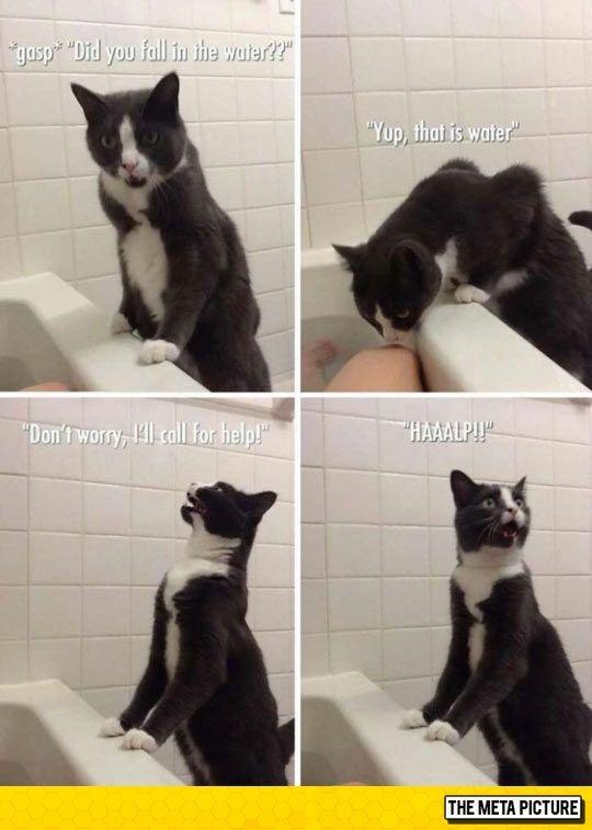 Cat Saving Human