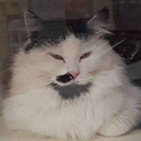 This judgmental cat at Petco cats cattos cat catto catmeme