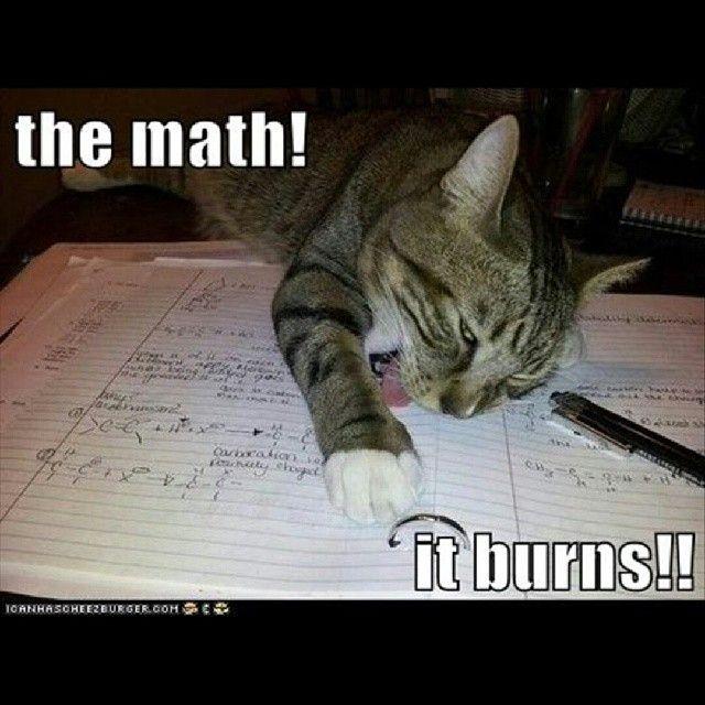 mathpics mathjoke mathmeme pic joke math meme haha funny humor pun burns cat