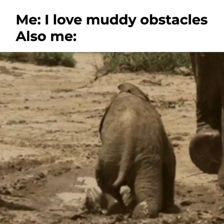 Find the Unbelievable Funny Animal Intervention Memes