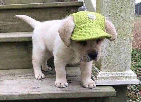 Funny & Cute Dog cutedogs dogobi nce