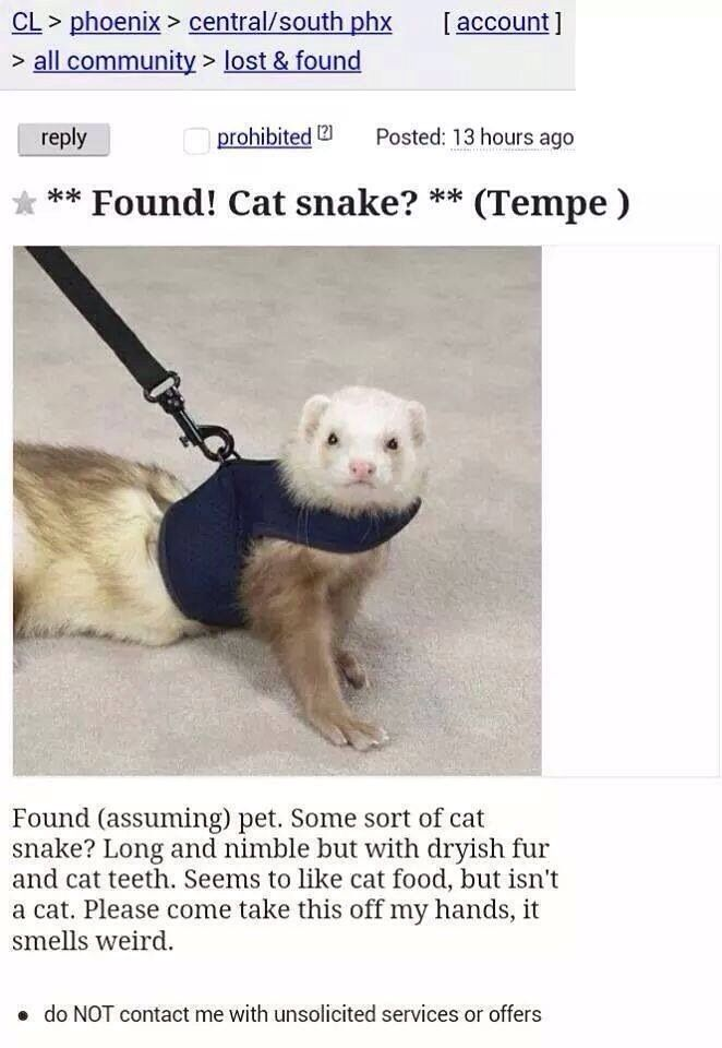 Cat snake
