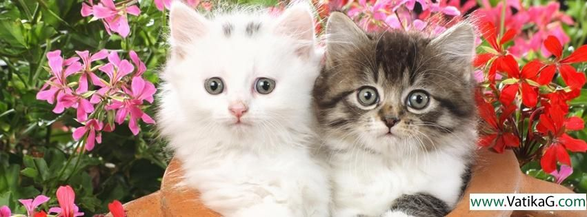 Cute cat fb cover