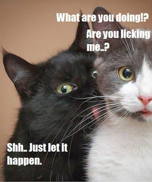 herding cats & burning soup Quote tastic 40 are you flirting with me