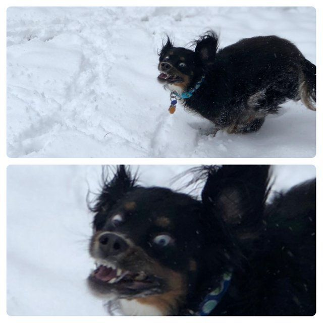 Find the Unbelievable Funny Dog Pictures In the Snow