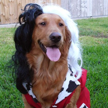 Cruella DeVille Dog Halloween Costumes 20 Funny Homemade Dog Costumes You ll Love Holidays