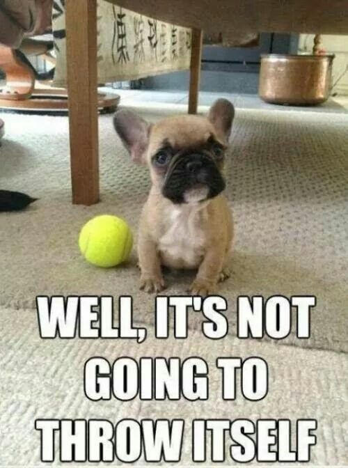 Well it s not going to throw itself Funny Dog Funny Dogs Funny