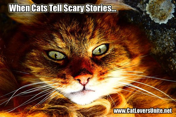 Scary stories told by cats