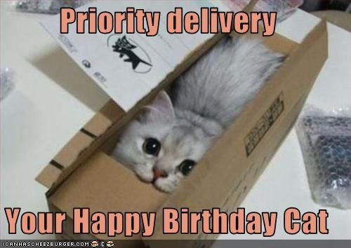 Priority delivery Your Happy Birthday Cat Cheezburger Funny Memes