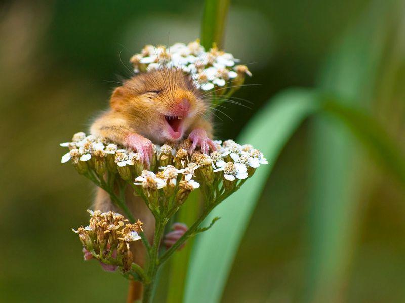Award Winning Capture the Goofiness of the Animal Kingdom Smart News