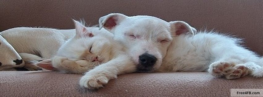 Cute timeline Cover Dog and Cat Cute timeline Cover