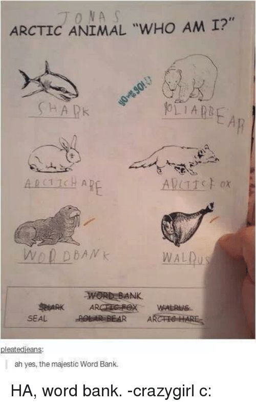 ARCTIC ANIMAL wHo AM I 0 D DAN k WORD BANK SEAL BEAR eate ans ah yes the majestic Word Bank HA word bank crazygirl c Meme