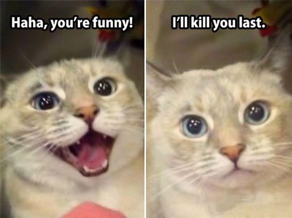 Laughing Kitty Meme