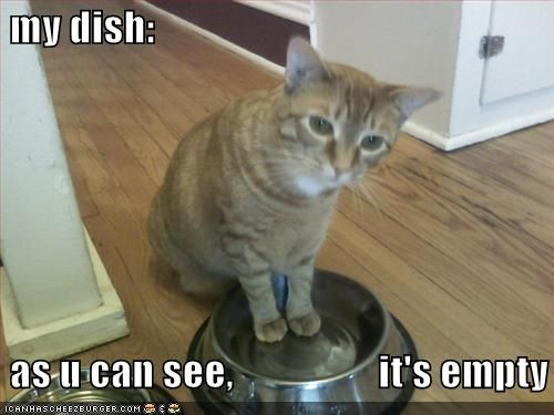 funny pictures cat wants bug