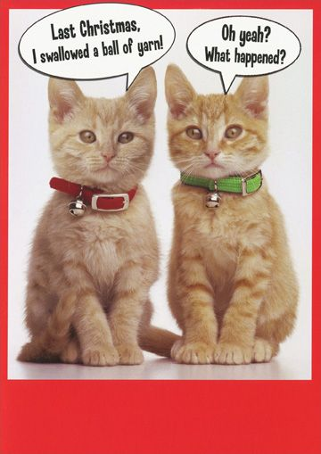 funny cat christmas cards happy holidays
