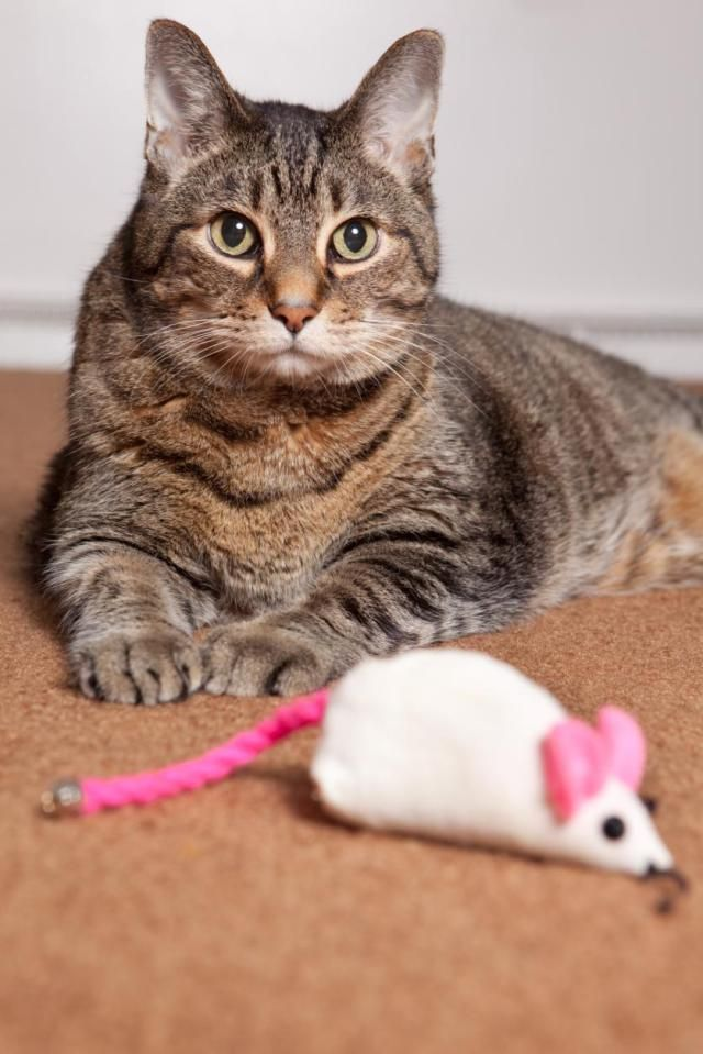 Bored cats can sometimes be e mischievous but fortunately there are several toys that can help keep them occupied and challenge their curiosity