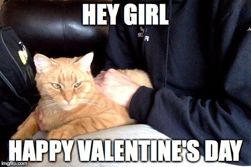 Find the Unique Funny Cat Valentines Day Pictures