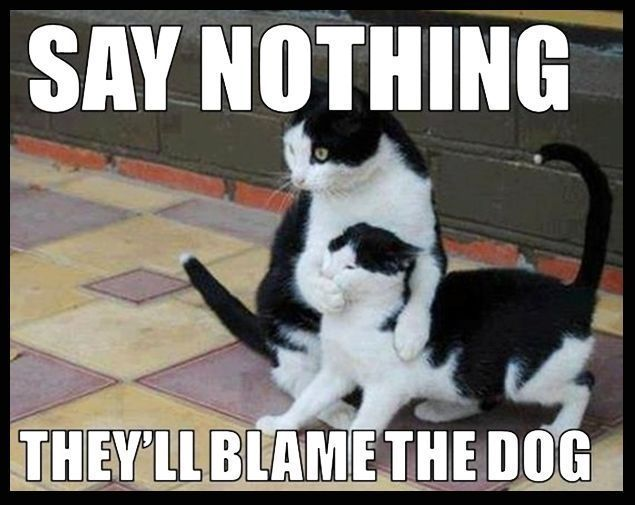 Say Nothing funny memes dogs cat cats meme funny quotes cute humor dog kitten