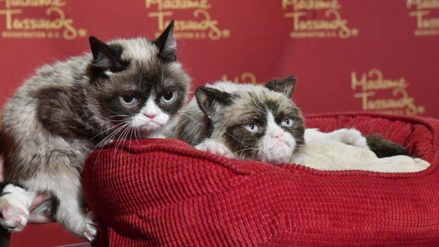 Grumpy Cat poses next to her animatronics version