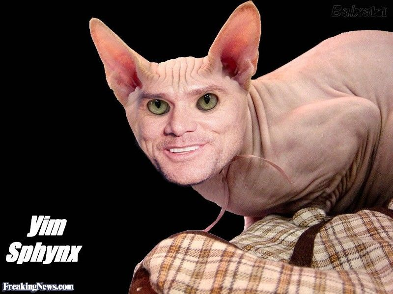 Funny Jim Carrey the Sphynx Cat