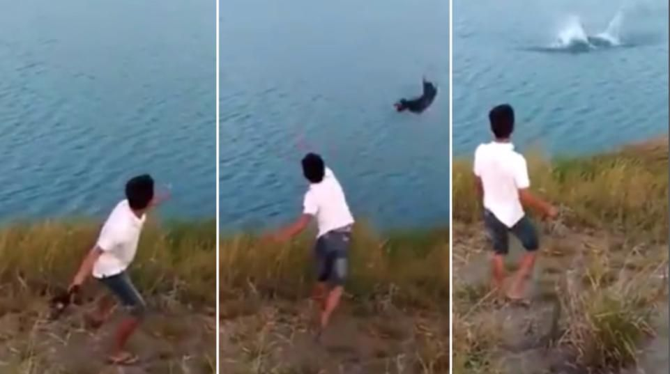 SHOCK VIDEO Petrified puppy launched into croc infested lake by thug World News