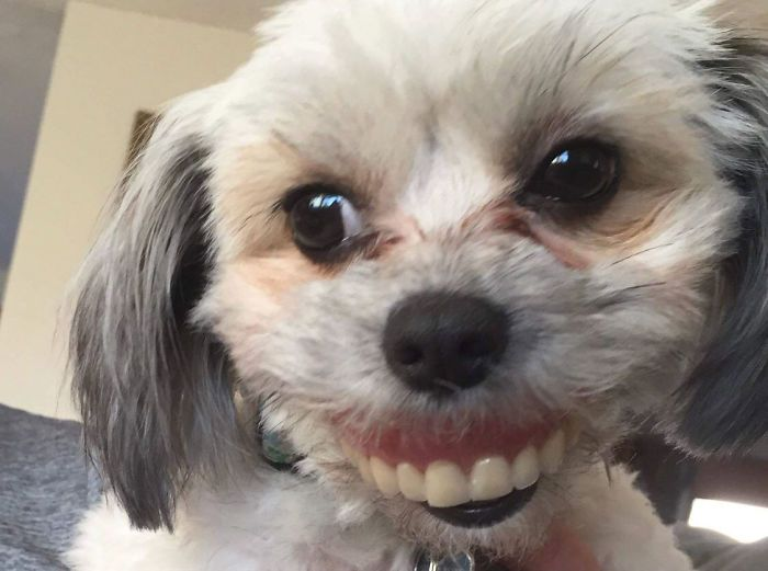 While Maggie was able to rock a pair of dentures she is pretty cute without them too