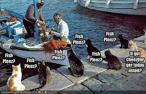 funny pictures cats wait by fishing boat